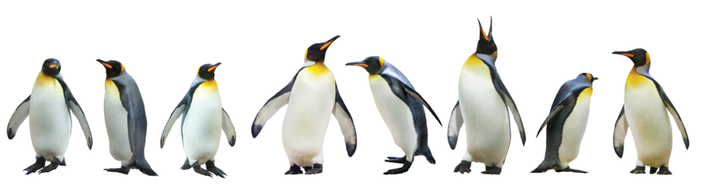 Idealogy Marketing Stand Out Penguins